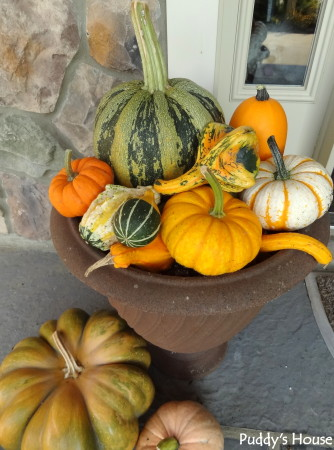 Fall Decorating - close up of pumpkins and gourds in flower pots