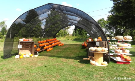 Fall  Decorating - pumpkin stand large pumpkins for sale