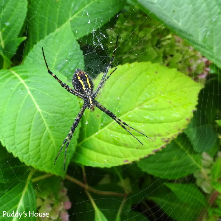 Nature - black and yellow spider and web