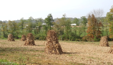 Tractor Ride - corn stalks in field