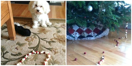 dog organization - Puddy - Popcorn cranberry incident collage