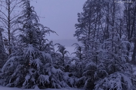 Winter blogging - snow covered trees