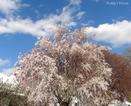 spring trees - Puddys House