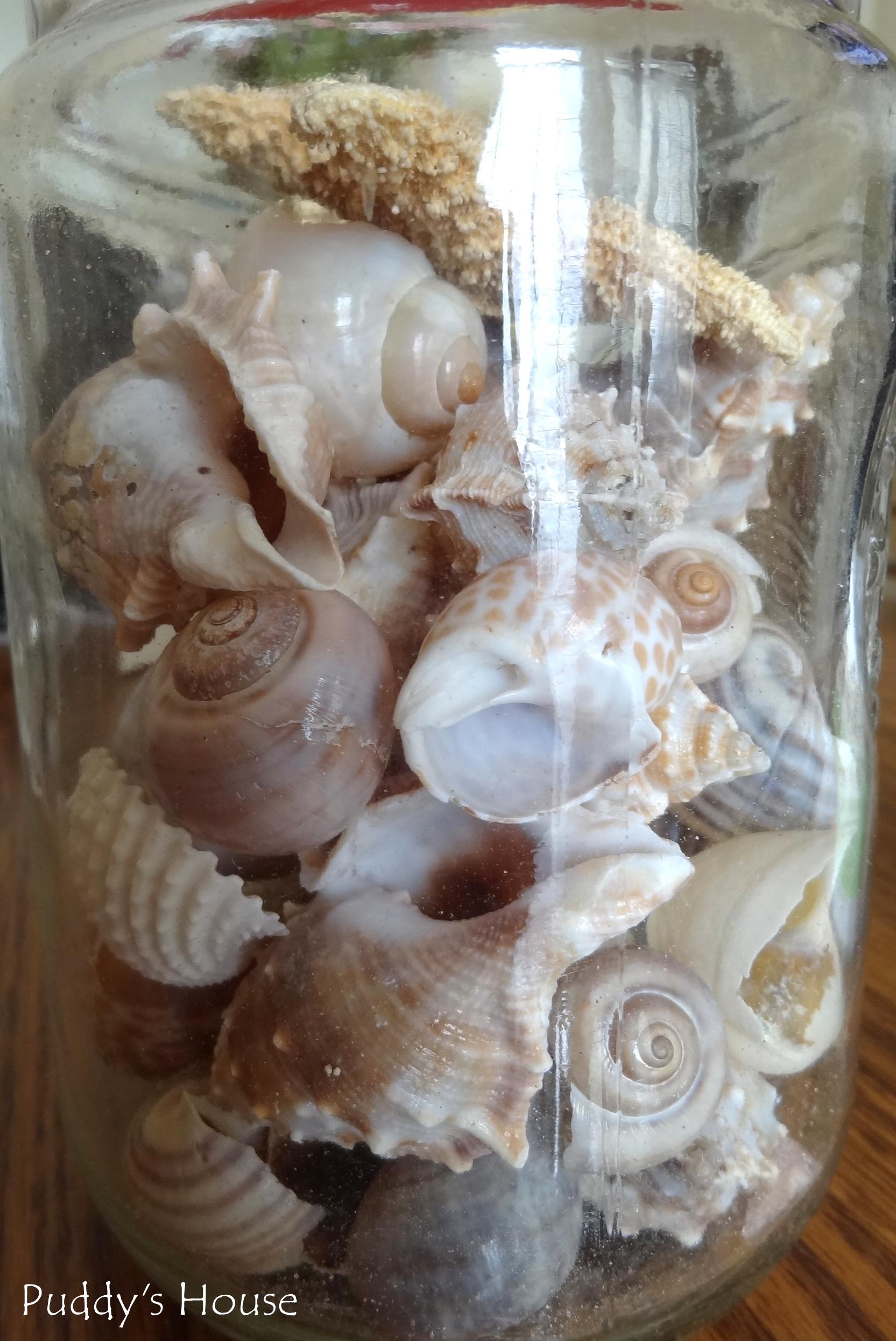 Diy Seashell Mirror Puddy S House
