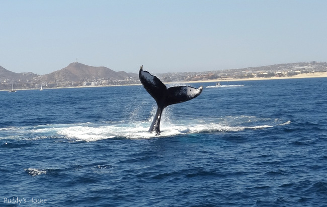 Highlights of Cabo San Lucas Mexico