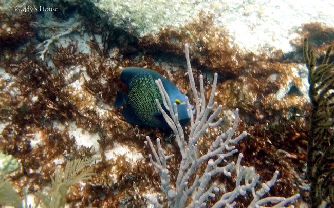 Mexico - Akumal snorkeling fish