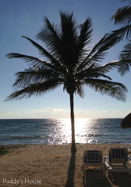 Mexico Palm tree beach