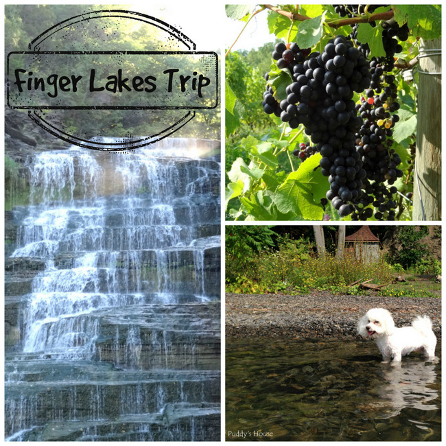 Finger Lakes Trip