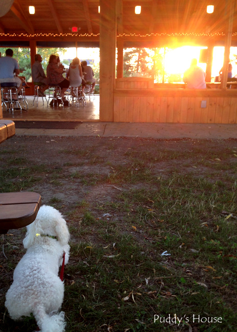 Finger Lakes - Puddy at winery