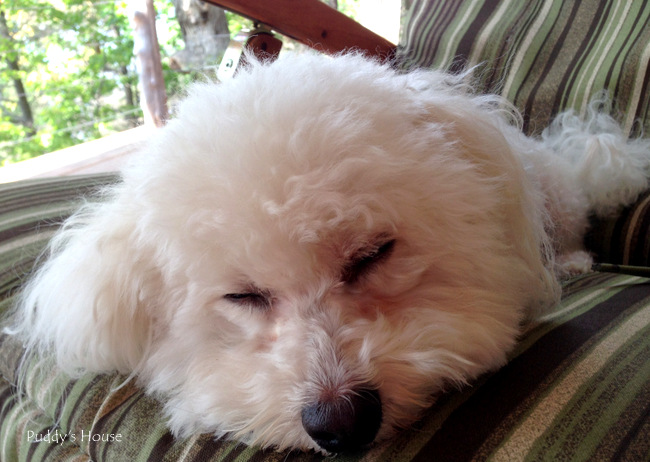 Finger Lakes - Puddy sleeping on porch