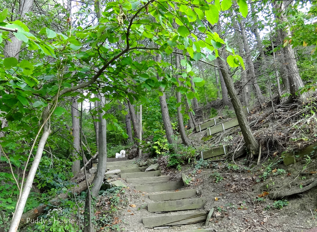 Finger Lakes - steps to the lake