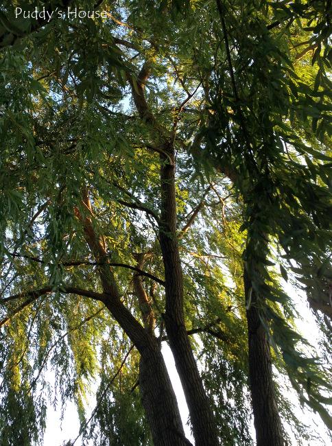 Finger Lakes - tree at dinner