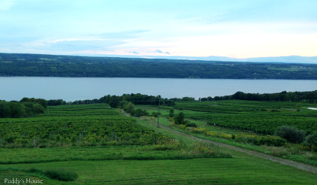 Finger Lakes - view of the vineyard