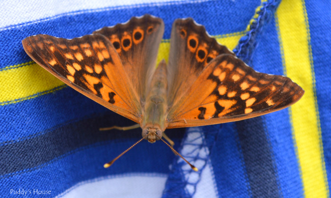 butterfly on clothes